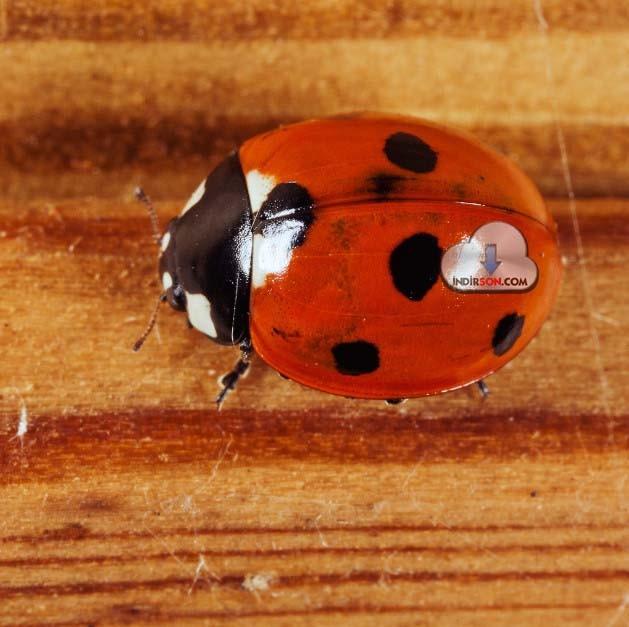 ipad hd uğur böceği